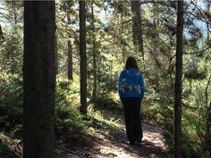 Forest bathing near Canmore.