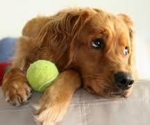 CachorrosBlogs.: Infecções Cutãneas - Cachorros.