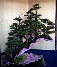 pin von markus bacher auf bonsaibaum bonsai forest. Black Bedroom Furniture Sets. Home Design Ideas