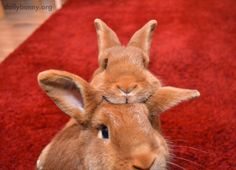 Bunnies Compete for the First Head Scratch