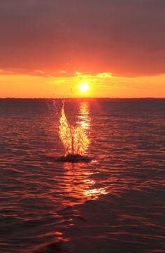 Herkkupurkki: valokuva, sunset, lake