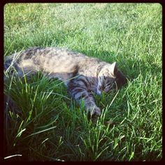My cat Moses.