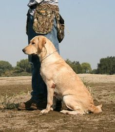 Good article: Every Day Items You Carry, Could Kill Your Service Dog