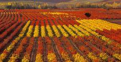 Horo Spain La Rioja España