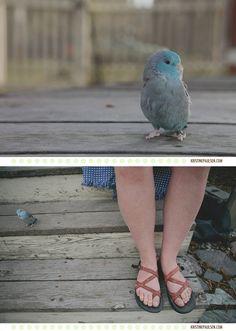 Flash the parrotlet. #bird #parrotlet