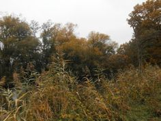 Natur und Leben: Herbstspaziergang