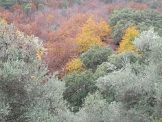 Sierra de Aracena Autumn colours