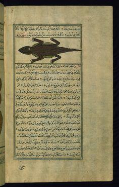 A skink Wonders of Creation  by Qazwīnī 1293 was translated to Turkish in 1717  completed by Rūzmah-ʾi Nāthānī - W659