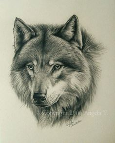 White Wolf : The Mongolian Wolf : Beautiful Subspecies of the Gray Wolf Animal Sketches, Animal Drawings, Art Sketches, Wolf Painting, Sketch Painting, Mago Tattoo, Tier Wolf, Ying Y Yang, Wolf Sketch