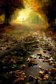 Thanks for visiting Beautiful Mother Nature. Sometimes people put up walls, not to keep others out, but to see who cares enough to break them down Beautiful World, Beautiful Places, Beautiful Pictures, Romantic Places, Beautiful Gorgeous, Amazing Places, Autumn Trees, Autumn Leaves, Autumn Fall