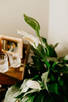 10 Houseplants That Need (Almost) Zero Sunlight - House Fur Indoor Plants Low Light, Best Indoor Plants, Indoor Herbs, Air Plants, Perennial Flowering Plants, Household Plants, Inside Plants, Plant Lighting, House Plant Care