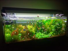 My 72 gal rimless (10/12:added photo with plant number ID)