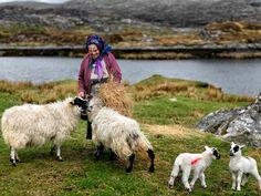 image Morag Morrison, the good shepherdess lickisto