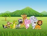 Vetor: Wild animal cartoon