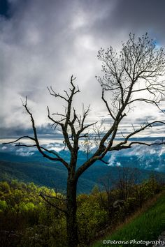 Cycle of nature #tree landscape sky clouds beautiful