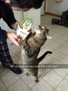 Funny Animal Pictures - View our collection of cute and funny pet videos and pics. New funny animal pictures and videos submitted daily. I Love Cats, Crazy Cats, Cool Cats, Funny Animal Pictures, Funny Animals, Cute Animals, Animal Pics, Funniest Pictures, Funny Horses