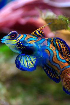 Tropical coloured fish