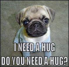 Need a Pug Hug?