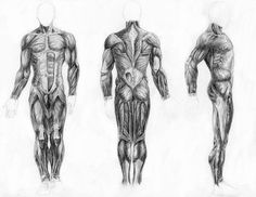 muscles of the body - Google Search