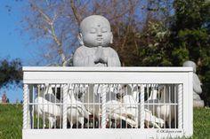 #Buddha #Dove #Doves #OCdoves #Films #Movies #Background #RentalProps (7l4) 903-65.99