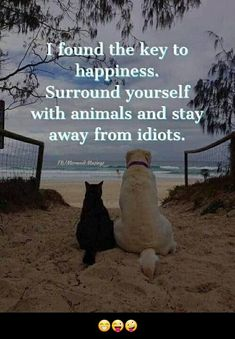 Dog Quotes, Animal Quotes, Animal Memes, I Love Dogs, Puppy Love, Cute Dogs, Key To Happiness, Happiness Project, Cute Funny Animals