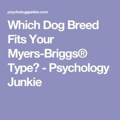 Which Dog Breed Fits