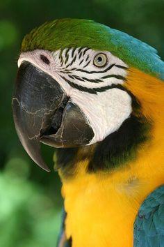 #Fantastici #pappagalli #Macaw www.visitami.net