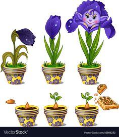 Buy Growth of Magical Flower with Human Face by Lady-Luck on GraphicRiver. Stages of growth in pot of magical flower with human face. Six phases of plant maturation. Vector image in cartoon st. Free Vector Images, Vector Free, Cartoon Flowers, Plant Science, Brochure Design Inspiration, Cartoon Styles, Game Art, Adobe Illustrator, Bloom