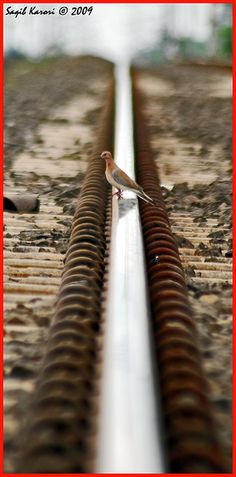 Fly from Rail