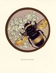 bumble bee by ~Cephalopodwaltz on deviantART