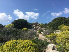 Cartoline Sardegna profumate