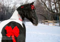 Walker horse adorned  with red Chrismas bows
