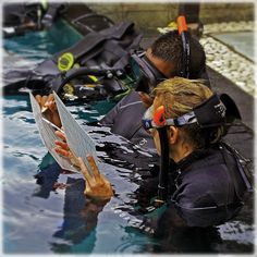 Check out our PADI IDC Program. If you wish to join our exclusive PADI IDC Course we run the program on a monthly basis here at our PADI Career Development Center in Gili Trawangan. Join the next or any future IDC courses.
