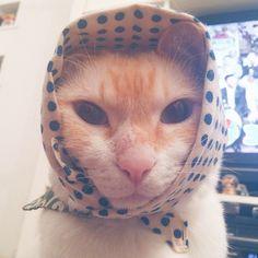 Babooshka kitty