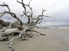 Driftwood Beach at Jekyll Island has some incredible nature scenes.  So glad I got to experience it.