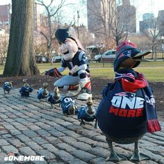 Hah Pats Patriot with Ducklings in Boston Common
