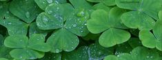 Clovers Facebook Cover CoverLayout.com