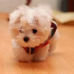 Super Cute Baby Puppies
