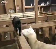 Funny Animal Jokes, Funny Cat Memes, Funny Animal Pictures, Cute Funny Animals, Animal Memes, Funny Dogs, Cute Cats, Big Cats, Cute Animal Videos