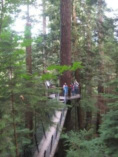 Capilano Suspension Bridge and walkways, tree houses. North of Vancouver, Canada -  amazing place!