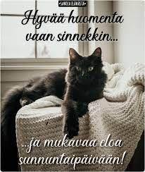 Sanoja elämästä - Hyvää sunnuntaita ❤️ | Facebook Sunday Quotes, Facebook, Cats, Animals, Gatos, Animales, Animaux, Animal, Cat