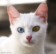 Résultats de recherche d'images pour «yeux vairons»