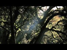 Trailer: Sintra - O Monte da Lua / Sintra - The Mountain of the Moon - by Aidnature.org
