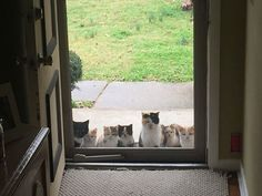 16 vicces macskás fotó