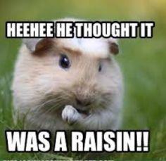 HeeHee. He thought it was a raisin.
