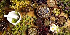 Plantas substituir o paracetamol e o ibuprofeno