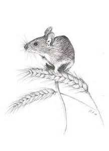 field mouse drawing - Bing Images