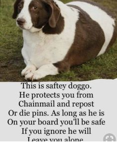 Take good care of this doggo. He is so cute! Cute Funny Animals, Cute Baby Animals, Funny Cute, Really Funny, Hilarious, Stupid Funny Memes, Funny Relatable Memes, Nerd Memes, Cute Puppies