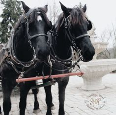 Why not get carried away whether in love and marriage or in a horse and carriage? Almost anything is possible at Nithridge Estates. Farm Wedding, Wedding Events, Cinderella Wedding, Anything Is Possible, Love And Marriage, Tours, Horses, Animals, Instagram
