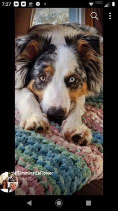 Puppy Sitting, Dog Food Recipes, Corgi, Puppies, Pets, Animals, Corgis, Cubs, Animales